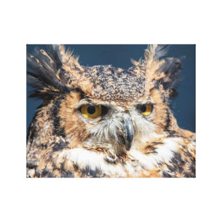 14x11 Great Horned Owl Portrait Canvas Print