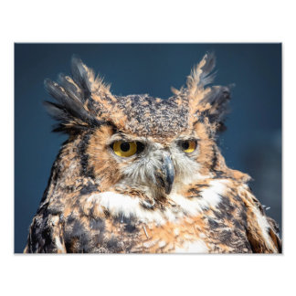 14x11 Great Horned Owl Portrait Photo Print