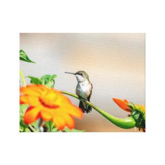 14x11  Hummingbird on a flowering plant Canvas Print