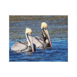 14x11 Pair of Pelicans Canvas Print