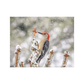 14x11 Red-bellied Woodpecker in the snow Canvas Print