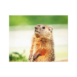 14x11 Young Groundhog Canvas Print