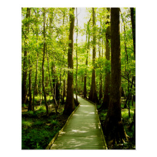 16x20 Poster - Forest Path