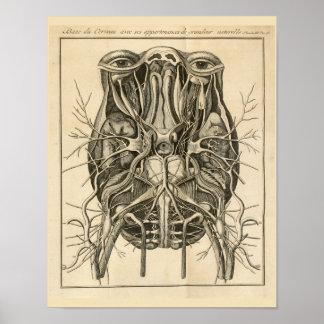 1744 Eyes Brain Cranial Nerves Anatomy Print