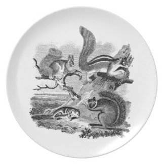 1800s Vintage Squirrels Illustration - Squirrel Plate