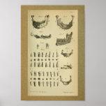 1850 Vintage Anatomy Print Jaw Teeth