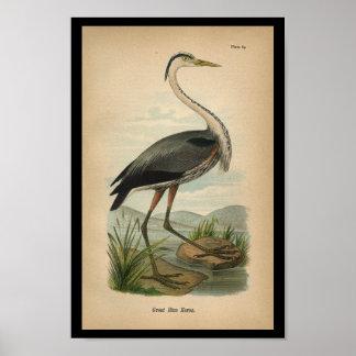1890 Bird Print Great Blue Heron