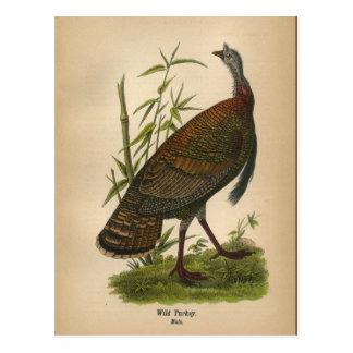 1890 Bird Wild Turkey Postcard