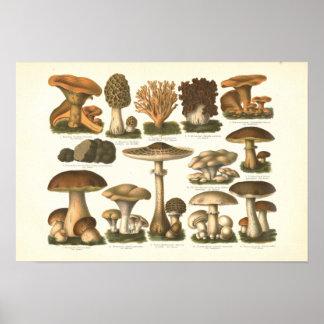 1894 Mushrooms Variety Fungus Print in German