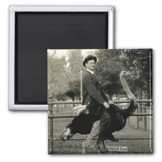 1910 Ostrich Riding Square Magnet