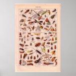 1920 insectes historiques   vintages poster