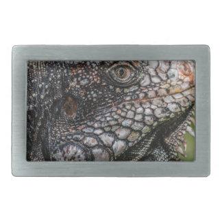 1920px-Iguanidae_head_from_Venezuela Belt Buckle