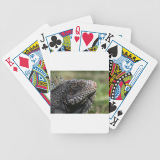 1920px-Iguanidae_head_from_Venezuela Bicycle Playing Cards