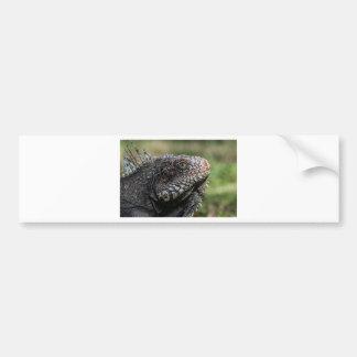 1920px-Iguanidae_head_from_Venezuela Bumper Sticker