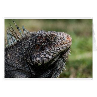 1920px-Iguanidae_head_from_Venezuela Card