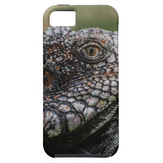 1920px-Iguanidae_head_from_Venezuela Case For The iPhone 5