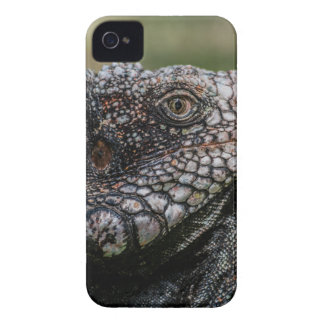1920px-Iguanidae_head_from_Venezuela Case-Mate iPhone 4 Cases