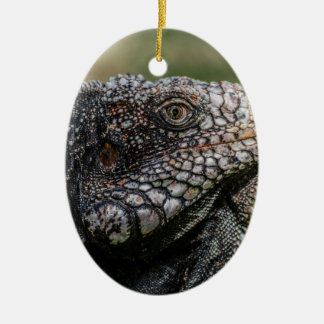 1920px-Iguanidae_head_from_Venezuela Ceramic Oval Ornament