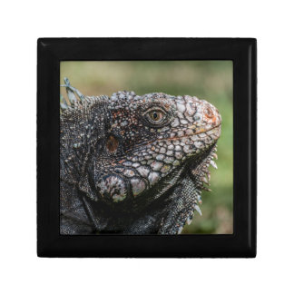 1920px-Iguanidae_head_from_Venezuela Gift Box