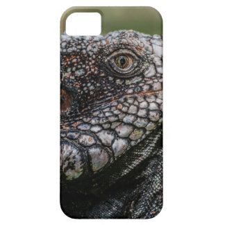 1920px-Iguanidae_head_from_Venezuela iPhone 5 Cases