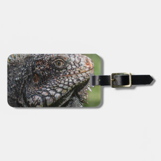 1920px-Iguanidae_head_from_Venezuela Luggage Tag
