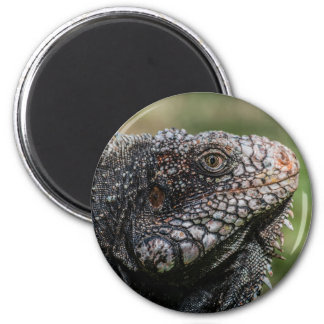 1920px-Iguanidae_head_from_Venezuela Magnet