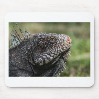1920px-Iguanidae_head_from_Venezuela Mouse Pad