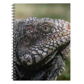 1920px-Iguanidae_head_from_Venezuela Notebooks
