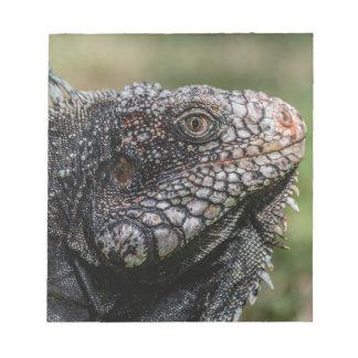 1920px-Iguanidae_head_from_Venezuela Notepad