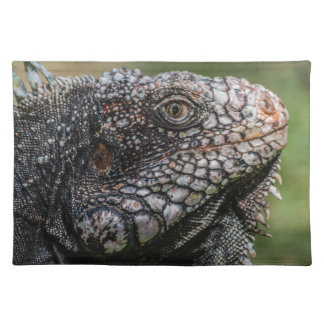 1920px-Iguanidae_head_from_Venezuela Placemat