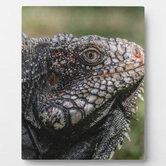 1920px-Iguanidae_head_from_Venezuela Plaque