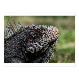 1920px-Iguanidae_head_from_Venezuela Postcard