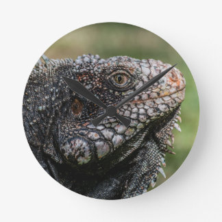 1920px-Iguanidae_head_from_Venezuela Round Clock