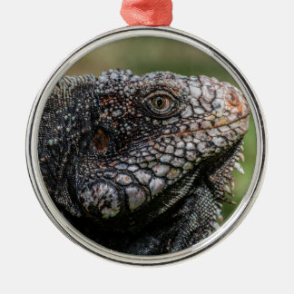 1920px-Iguanidae_head_from_Venezuela Silver-Colored Round Ornament