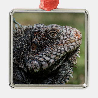 1920px-Iguanidae_head_from_Venezuela Silver-Colored Square Ornament