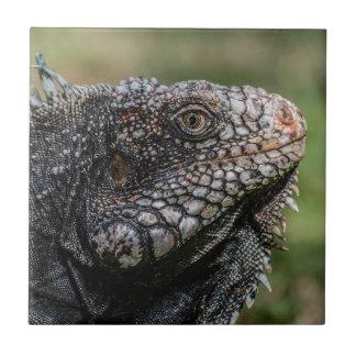 1920px-Iguanidae_head_from_Venezuela Tile