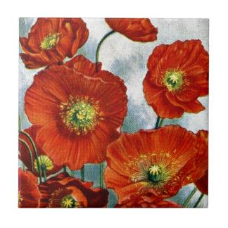 1922 Iceland Poppy Illustration Tile