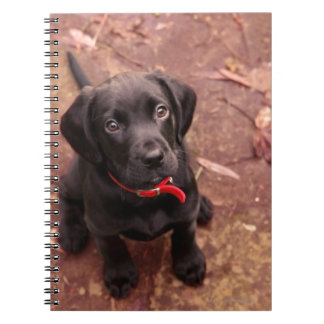19 Week Old Black Lab Notebook