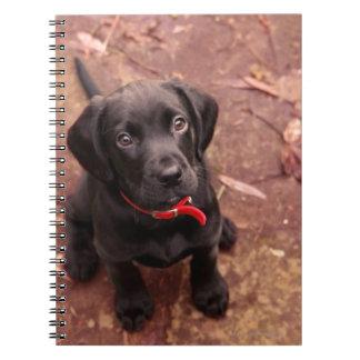 19 Week Old Black Lab Spiral Notebook