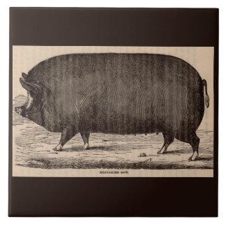 19th century farm animal print Berkshire sow pig Ceramic Tiles