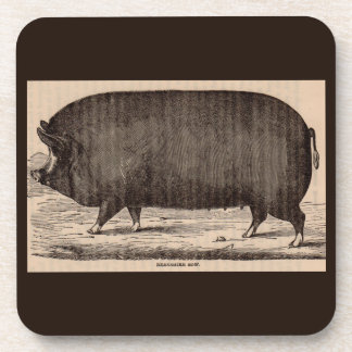 19th century farm animal print Berkshire sow pig Coaster