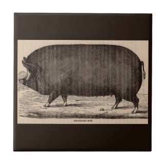 19th century farm animal print Berkshire sow pig Tile