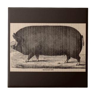 19th century farm animal print Berkshire sow pig Tiles