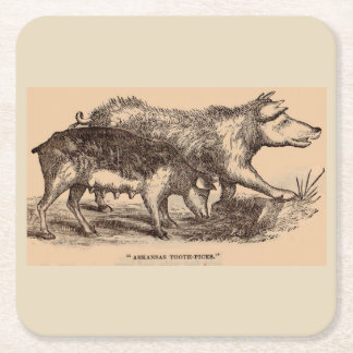 19th century farm animal print pigs square paper coaster