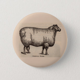19th century print Cotswold sheep 2 Inch Round Button