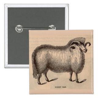 19th century print Dorset ram 2 Inch Square Button