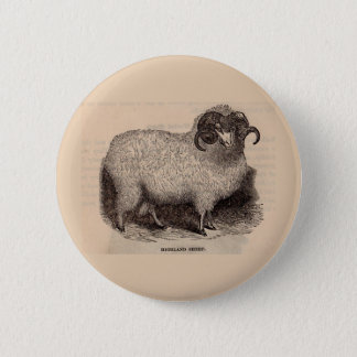 19th century print Highland sheep 2 Inch Round Button