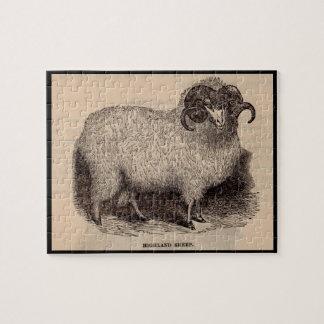 19th century print Highland sheep Jigsaw Puzzle