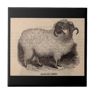 19th century print Highland sheep Tile