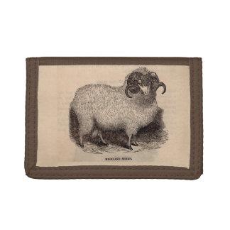 19th century print Highland sheep Tri-fold Wallet